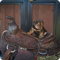 Adopt A Pet :: Briggum Maine - Russellville, KY