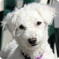 Adopt A Pet :: Samantha - La Costa, CA