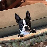Adopt A Pet :: *Nacho - PENDING - Westport, CT