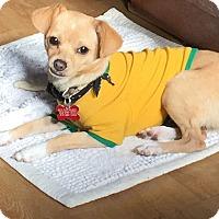 Adopt A Pet :: Sailor! View my video! - Los Angeles, CA