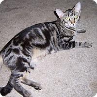 Adopt A Pet :: Sweet Pea - Ravenel, SC