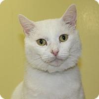 Adopt A Pet :: Ringo - Lunenburg, MA