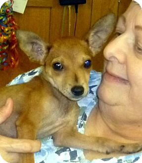Chihuahua/Terrier (Unknown Type, Medium) Mix Puppy for adoption in Livingston, Texas - Sadie