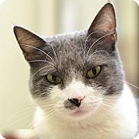 Adopt A Pet :: Lily Kai - Novato, CA