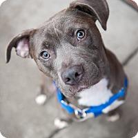 Adopt A Pet :: Luke - Villa Park, IL