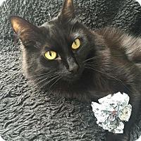Adopt A Pet :: Figaro - Burbank, CA