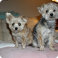 Adopt A Pet :: Winnie and Pooh - Henderson, NV