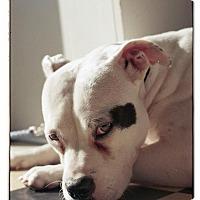 Adopt A Pet :: Nancy - Atlanta, GA