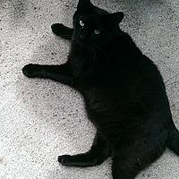 Adopt A Pet :: Kato - Bonita Springs, FL