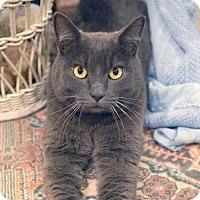 Adopt A Pet :: Leon - Alameda, CA