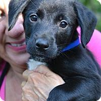 Adopt A Pet :: Jackson - Enfield, CT
