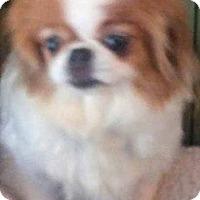 Adopt A Pet :: Mackenzie - Chesterfield, MO