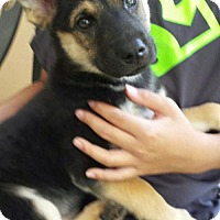 Adopt A Pet :: Smock - Royal Palm Beach, FL