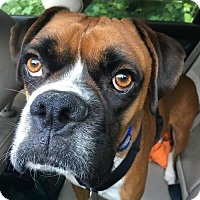 Adopt A Pet :: Ted - Woodinville, WA