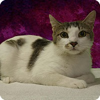 Adopt A Pet :: Lois - New Castle, PA