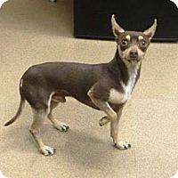 Adopt A Pet :: Chico - Las Vegas, NV