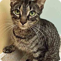 Adopt A Pet :: Ally - Oswego, IL