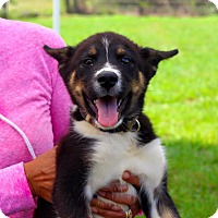 Adopt A Pet :: Clyde - Fort Valley, GA