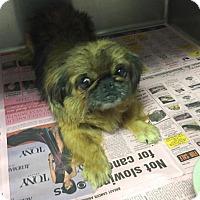 Adopt A Pet :: Li Li - Ball Ground, GA