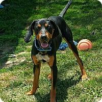 Adopt A Pet :: Carson - Lisbon, OH