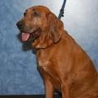 Hound (Unknown Type) Mix Dog for adoption in Stafford, Virginia - JJ
