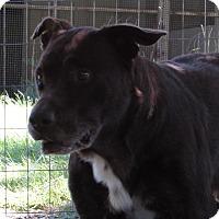 Adopt A Pet :: ABRAHAM - Jackson, MO