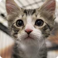 Adopt A Pet :: Carefree - Sarasota, FL