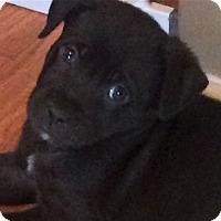 Adopt A Pet :: Clipper - Oakley, CA