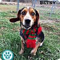 Adopt A Pet :: Besty - Kimberton, PA