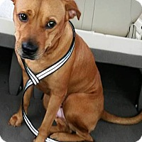 Adopt A Pet :: SANDY--POTENTIAL EMOTIONAL SUPPORT ANIMAL - DeLand, FL