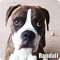 Adopt A Pet :: Randall - Encino, CA