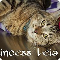 Adopt A Pet :: Princess Leia - Livonia, MI