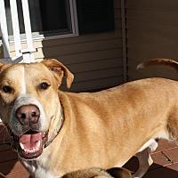 Adopt A Pet :: Gage - Nashua, NH