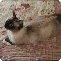 Adopt A Pet :: Arabella - San Ramon, CA