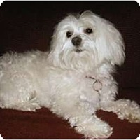 Adopt A Pet :: Candy - Mooy, AL