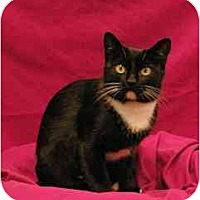 Adopt A Pet :: Ruby - Sacramento, CA