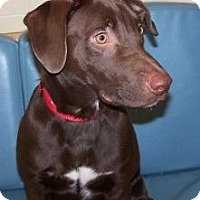Adopt A Pet :: Russell - Jackson, MI