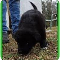 Adopt A Pet :: Lynxie - Brattleboro, VT