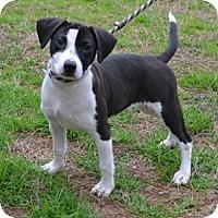 Adopt A Pet :: Roxie - Athens, GA