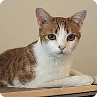 Adopt A Pet :: Sonny - Brooklyn, NY