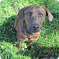 Adopt A Pet :: Roxie - Covington, KY