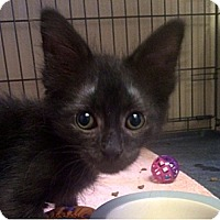 Adopt A Pet :: Dash - Fountain Hills, AZ