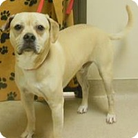 Adopt A Pet :: Bubba - Gary, IN