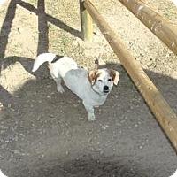 Adopt A Pet :: Charlie Colorado - Phoenix, AZ