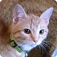 Adopt A Pet :: Raja & Olaf - Horsham, PA