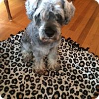 Adopt A Pet :: Duffy - Pierrefonds, QC