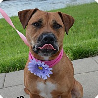 Adopt A Pet :: Rosie - Independence, MO