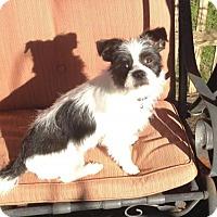 Adopt A Pet :: Teaky - KANNAPOLIS, NC