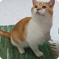 Adopt A Pet :: Lucky - Chambersburg, PA