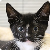 Adopt A Pet :: Chipmunk - Sarasota, FL
